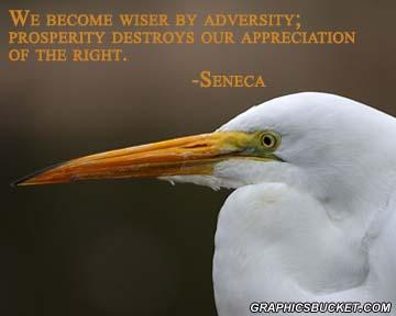 Adversity quote #3