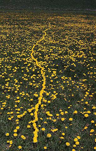 Andy Goldsworthy's quote #8
