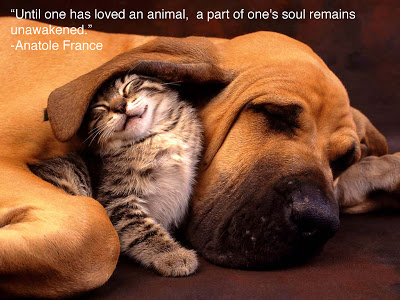 Animal Lover quote #1