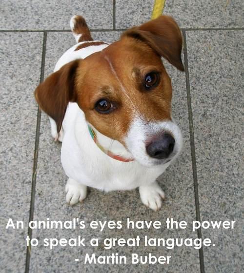 Animal quote #1