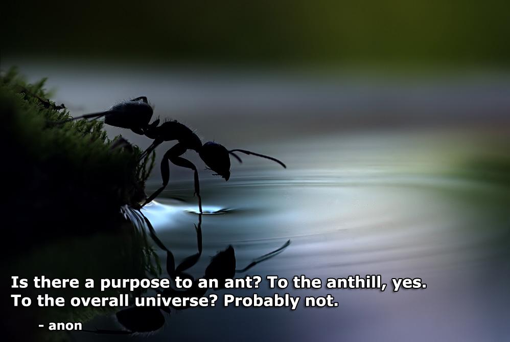 Ant quote #1