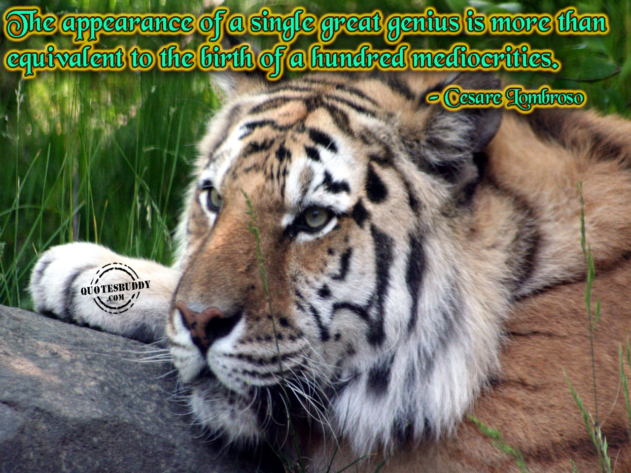 Appearances quote #2