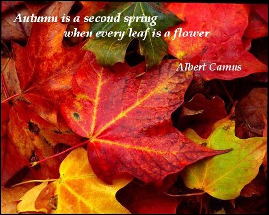 Autumn quote #5