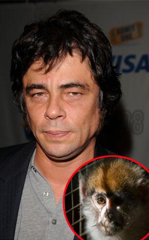 Benicio Del Toro's quote #8
