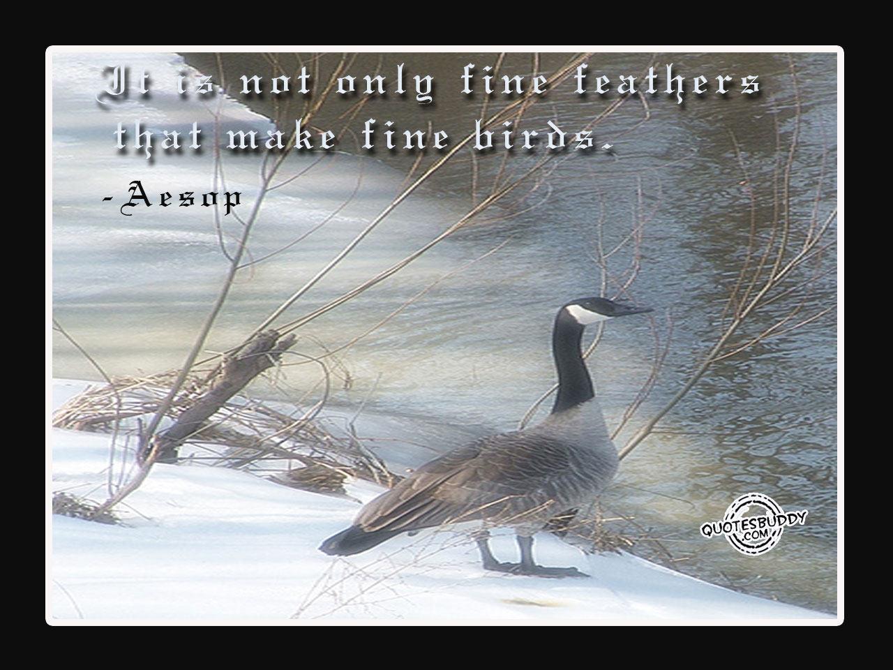 Bird quote #1