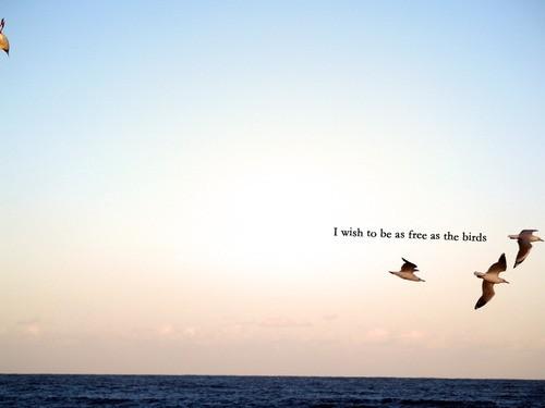 Bird quote #7