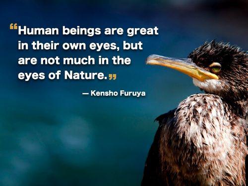 Birds quote #4