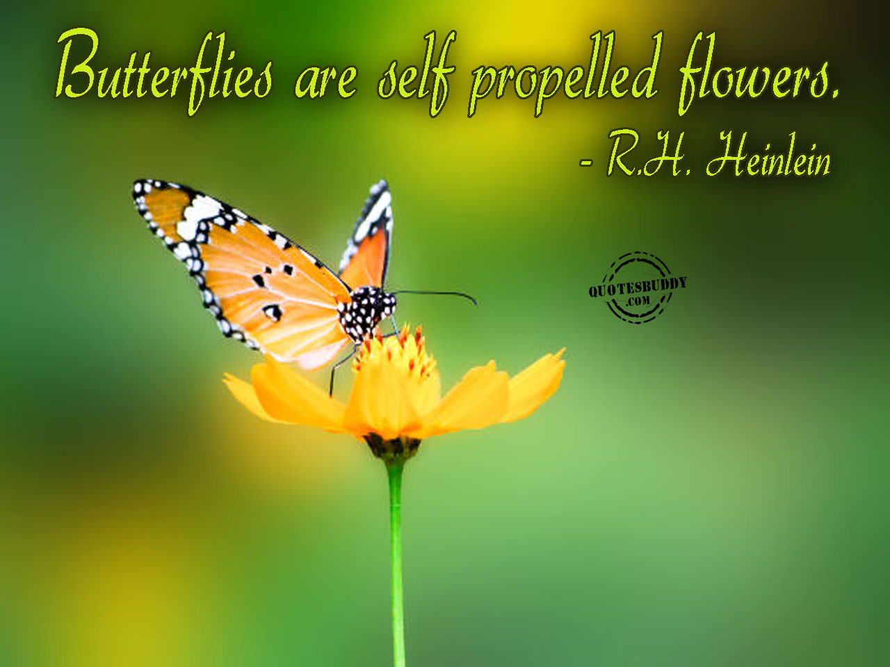 Butterfly quote #2