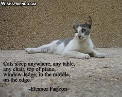Cat quote #2