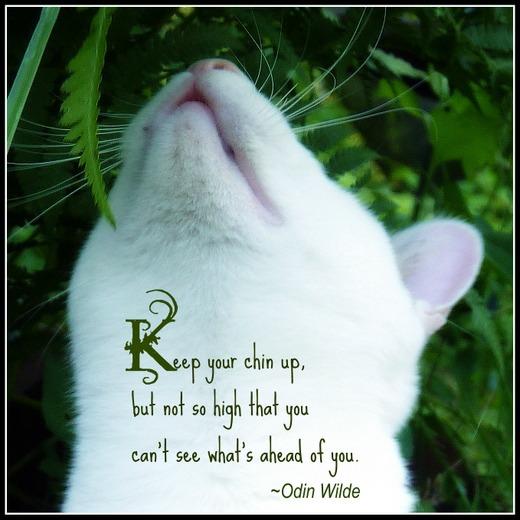 Cat quote #3