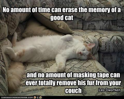 Cat quote #4