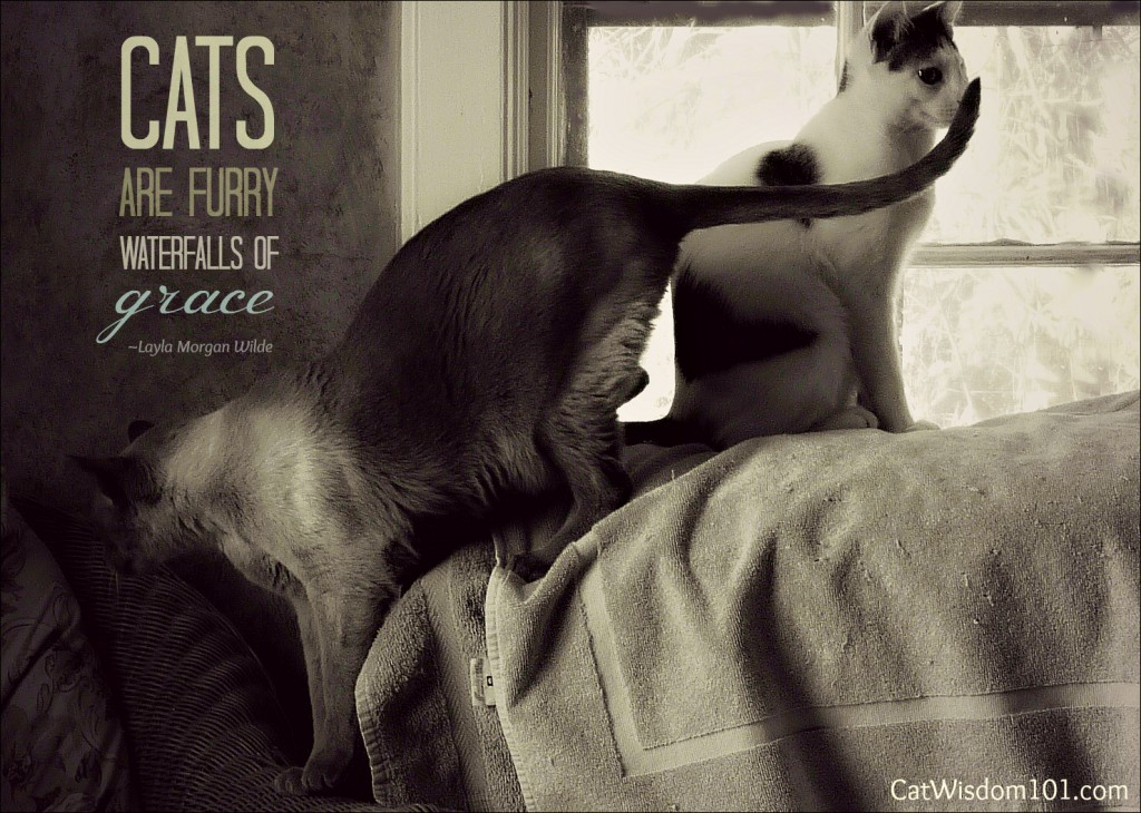 Cats quote #5