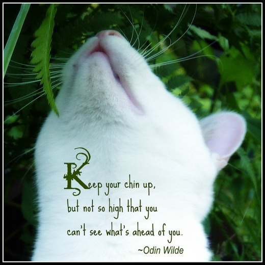 Cats quote #6