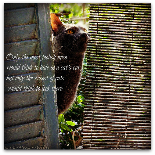 Cats quote #1
