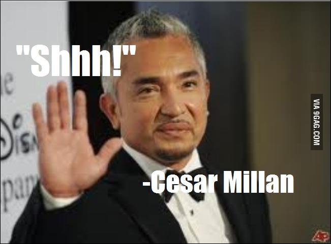 Cesar Millan's quote #3