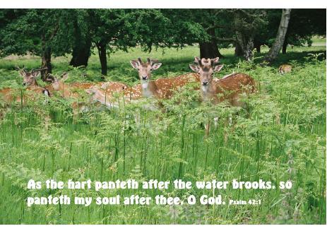 Deer quote #1