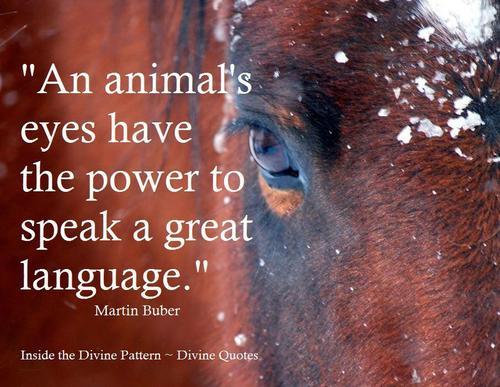 Divine quote #6