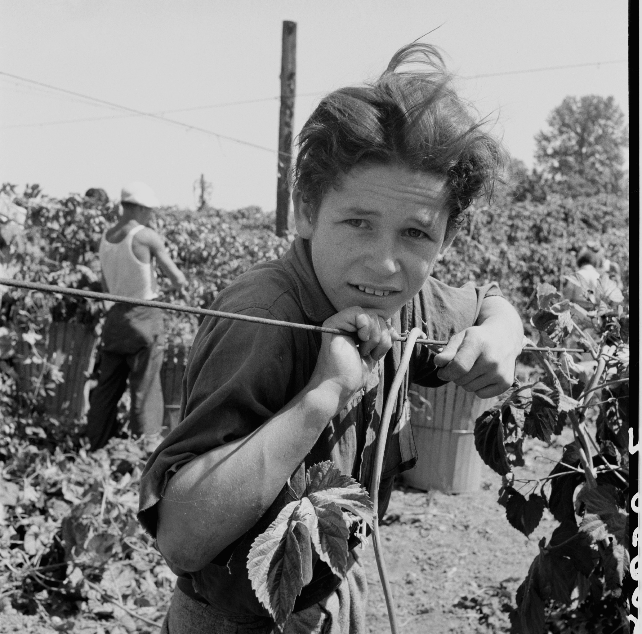 the life of dorothea lange essay Students analyze one of dorothea lange's photographs and create a one-page written and visual response.
