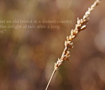 Drought quote #2