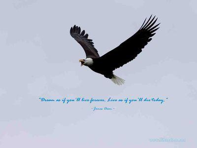 Eagle quote #1