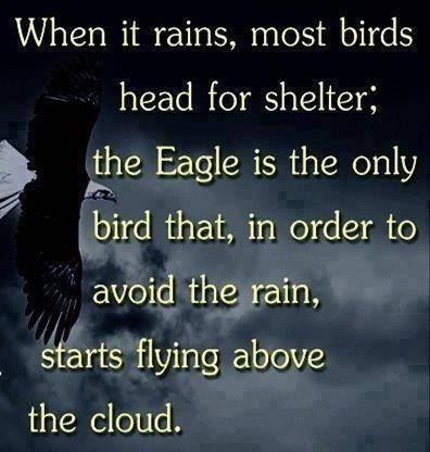 Eagle quote #3