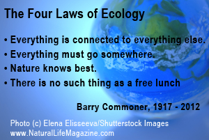 Ecology quote #2