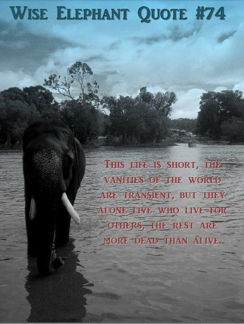 Elephant Quotes | Famous Quotes About Elephant Sualci Quotes