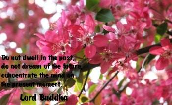 Enlightened quote #1