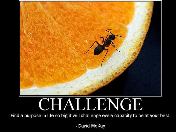 Evolve quote #8