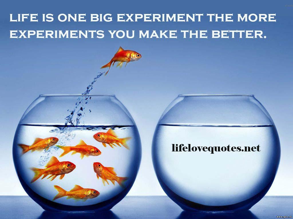 Experiment quote #7