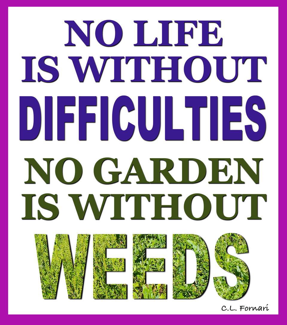 Gardening quote #7
