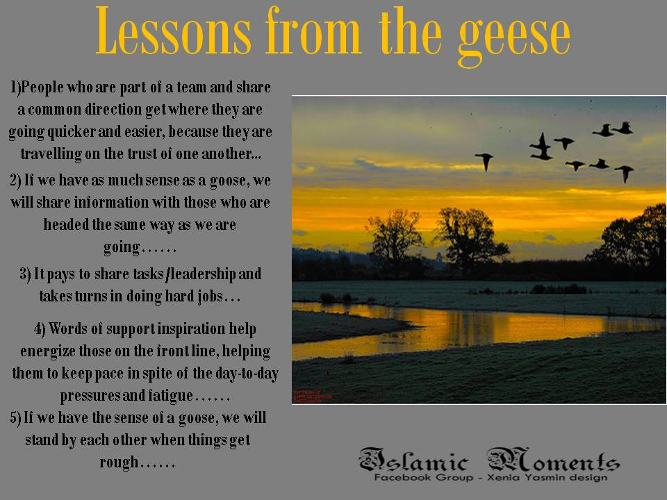 famous quotes about  geese  sualci quotes clipart of turkey breast clipart of turkey breast