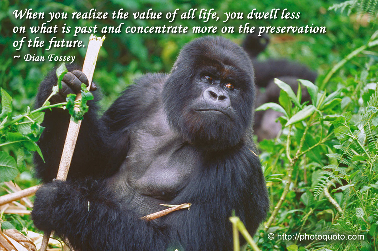 Gorilla quote #1