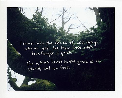 Graces quote #1