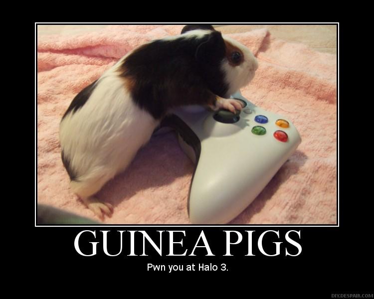 Guinea Pig quote #2
