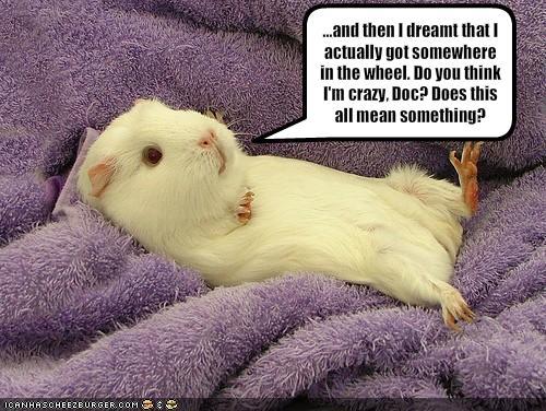 Guinea Pig quote