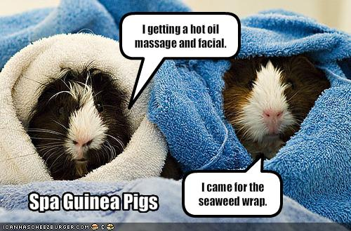 Guinea Pigs quote #2