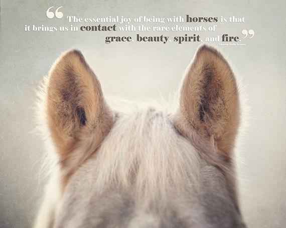Horse quote #8