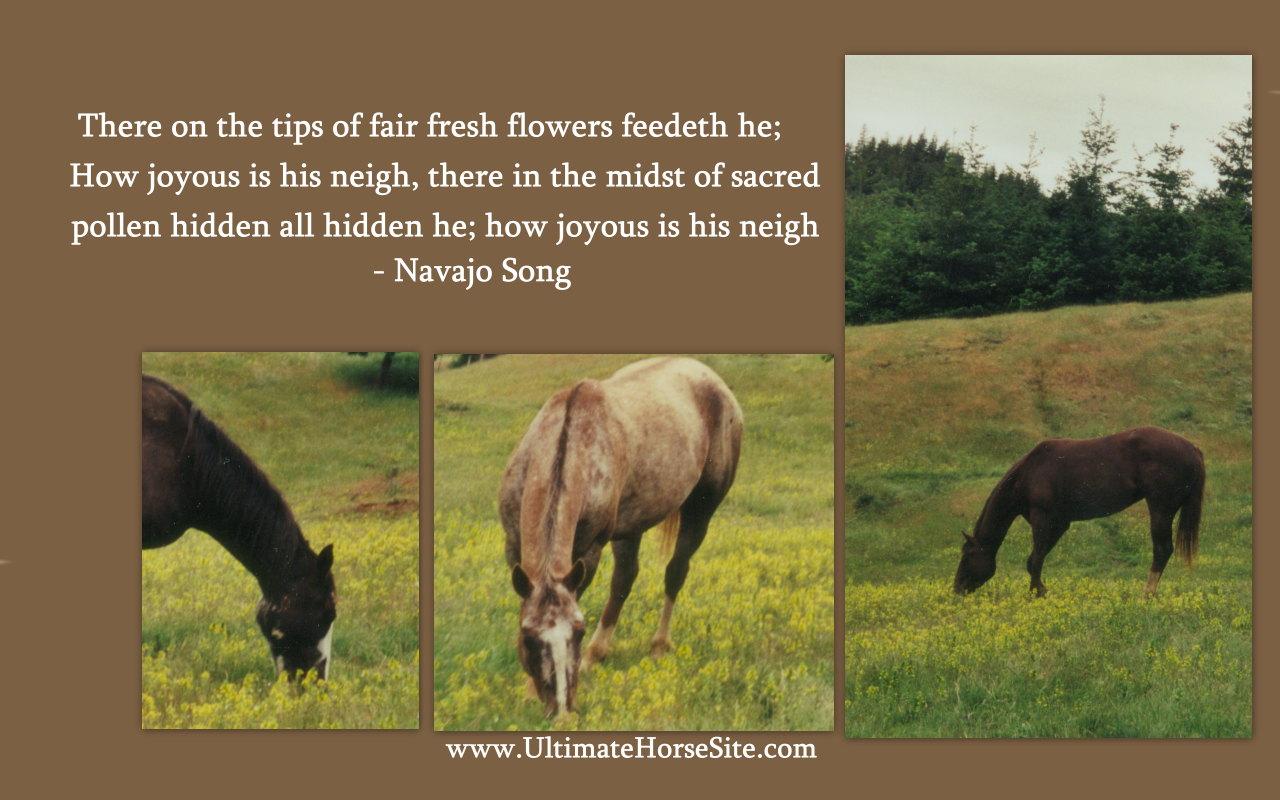 Horses quote #5