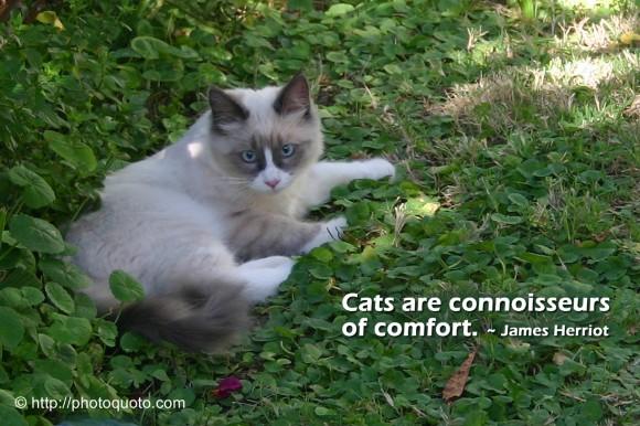 James Herriot's quote #2