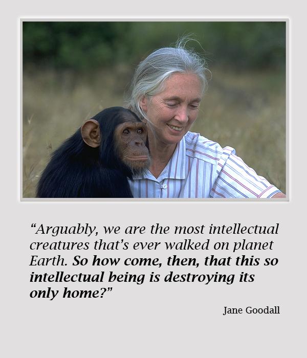 Jane Goodall's quote #1