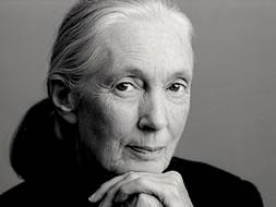 Jane Goodall's quote #8