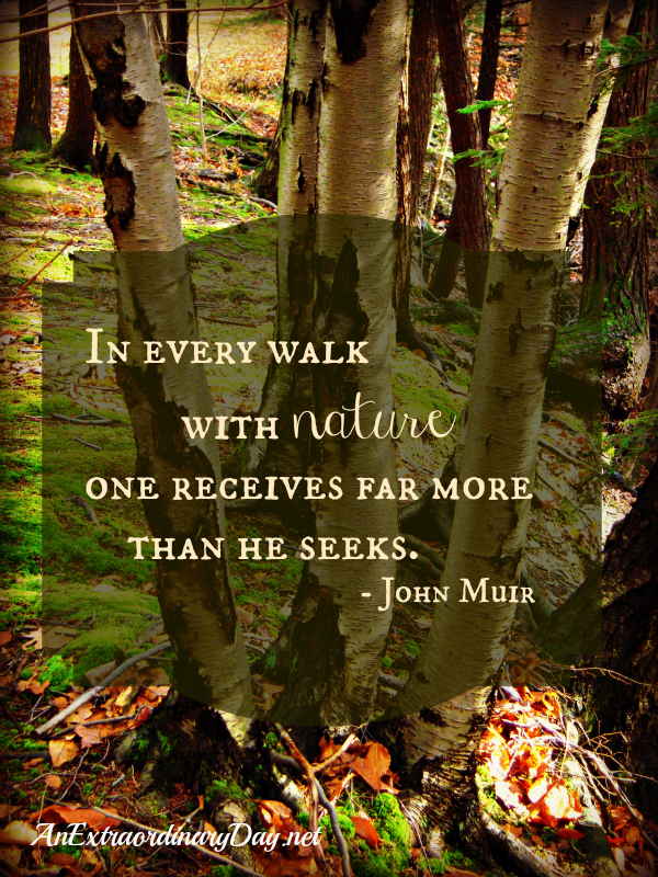 John Muir's quote #2