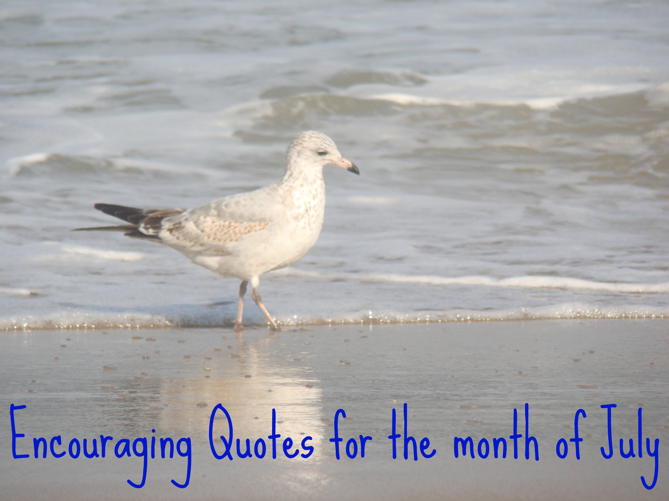 July quote #2
