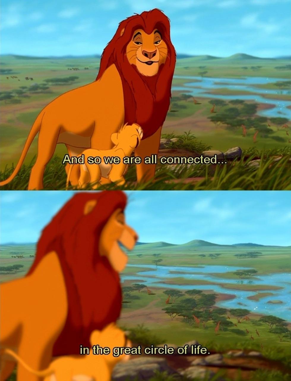 Lion quote #4