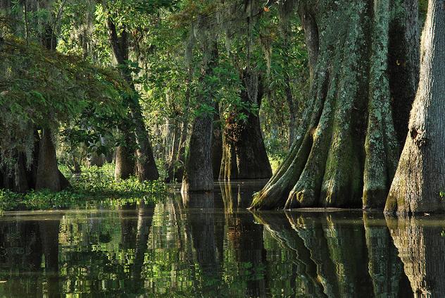 Louisiana quote #4