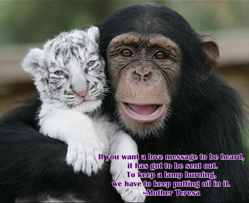 Monkey quote #2