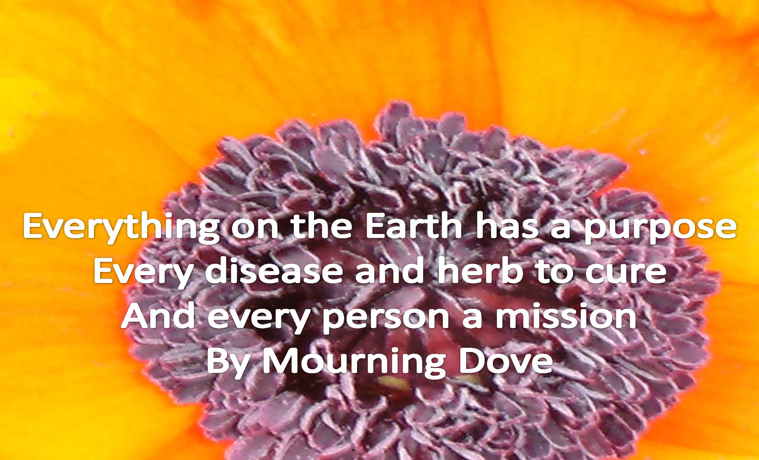 Mourning Quotes Famous Quotes About 'mourning'  Sualci Quotes