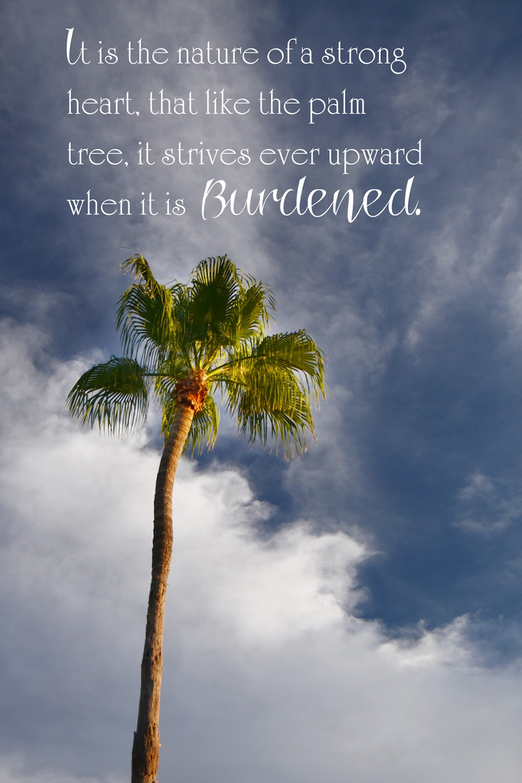 Palm quote #1