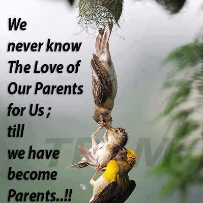 Parents quote #5